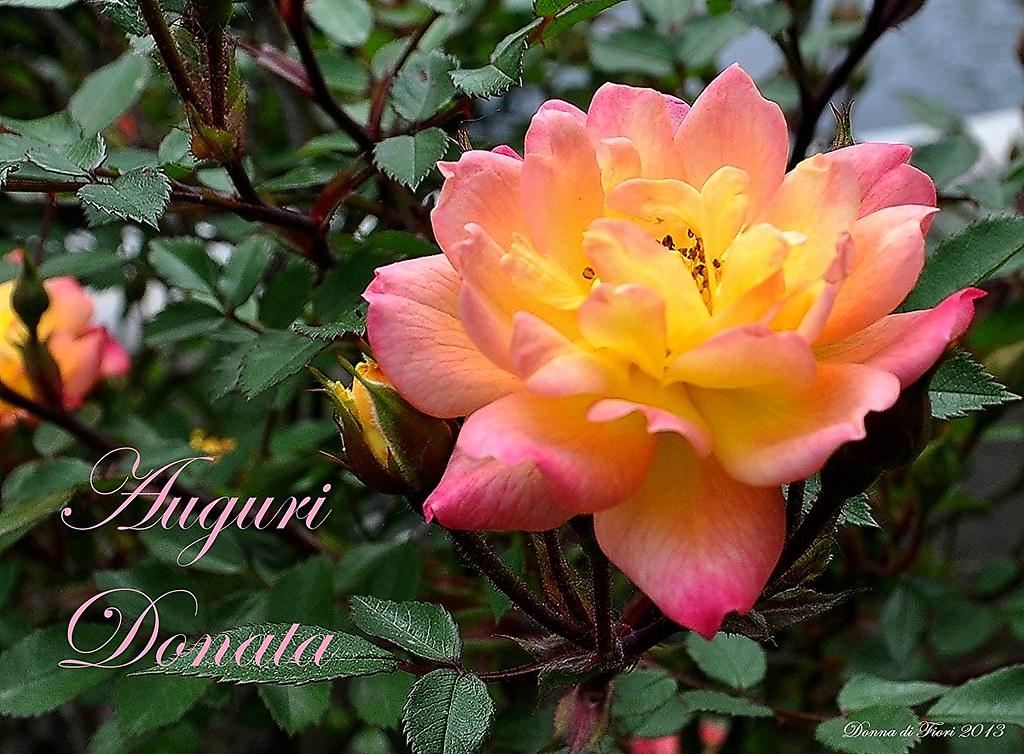 Buon 1 compleanno piccolo fiore di primavera all for Fiori di primavera