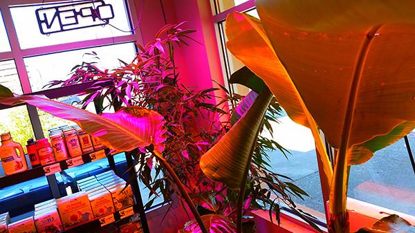 Beau Tacoma Tropical Plants | By Juliegunderson Tacoma Tropical Plants | By  Juliegunderson