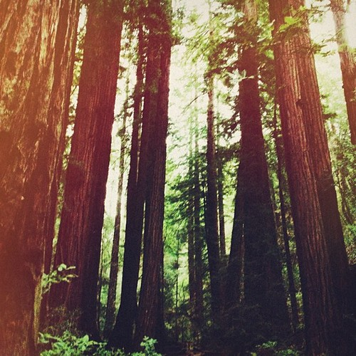Muir Woods | by thisisstar