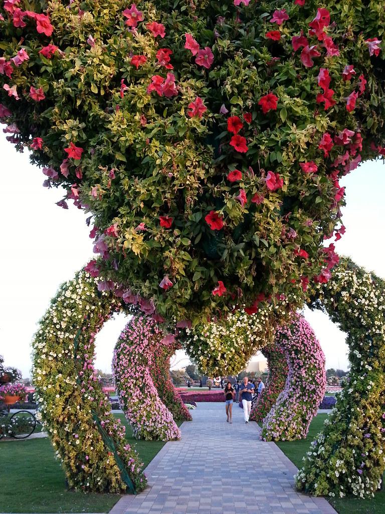 Dubai Miracle Garden | assadalsarraj | Flickr