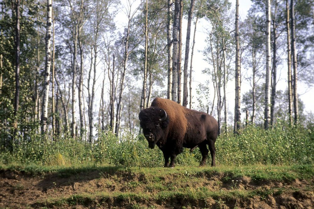 Elk Island National Park Location