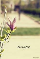 Spring by Juana Pérez