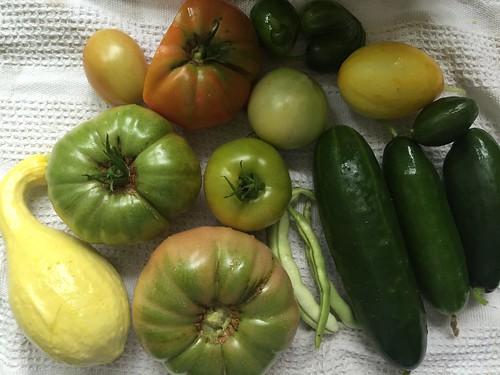 harvest 8-10-16 IMG_7235