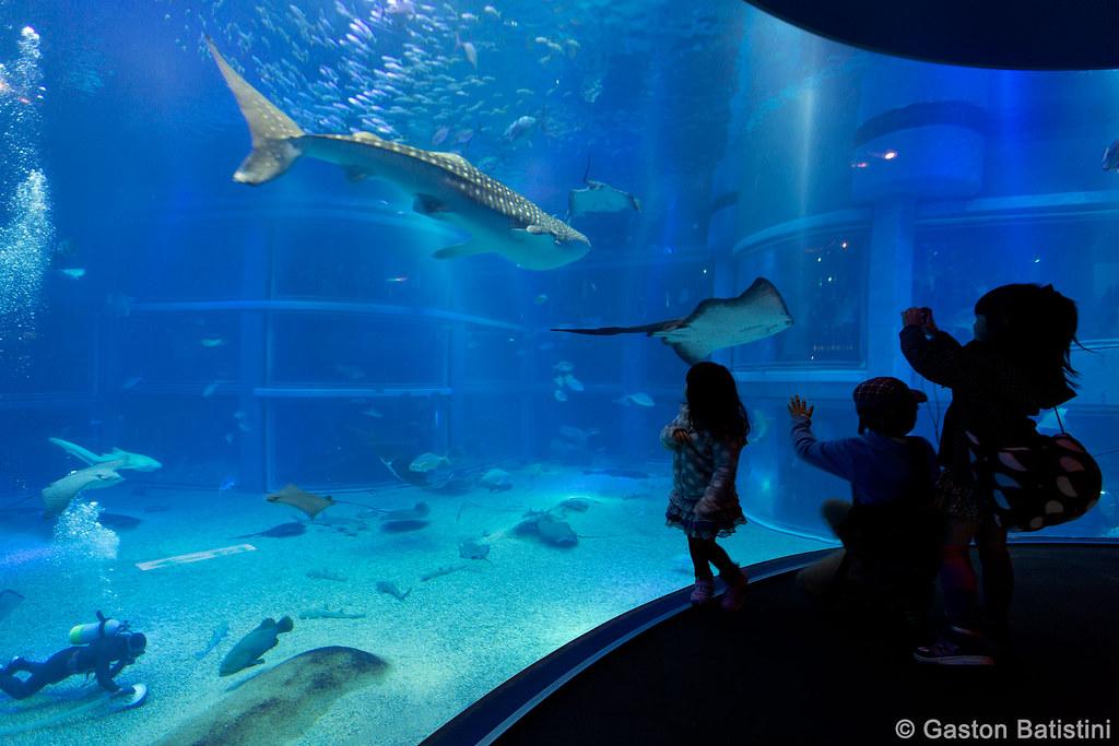 Osaka Aquarium Kaiyukan Japan The Osaka Aquarium