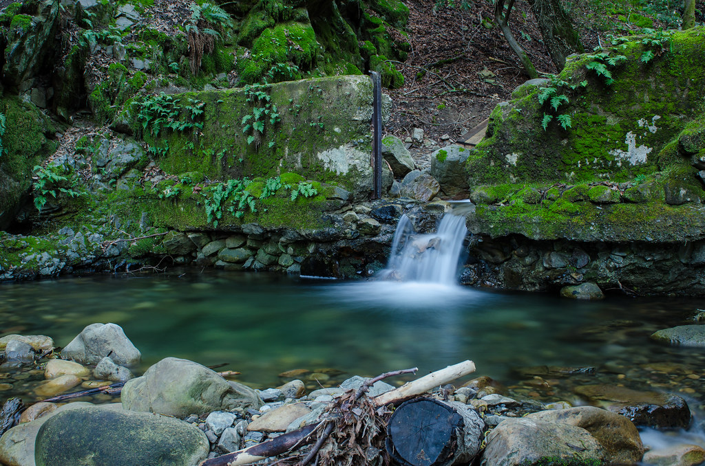 Uvas Canyon County Park, | Went for a morning hike with ...