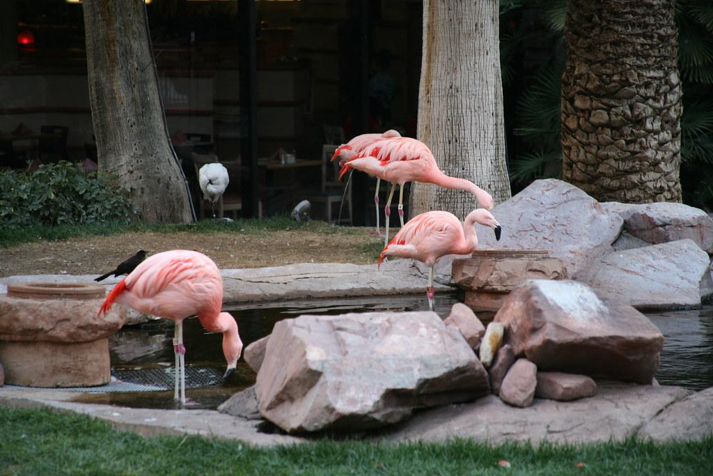 New Rooms Flamingo Las Vegas