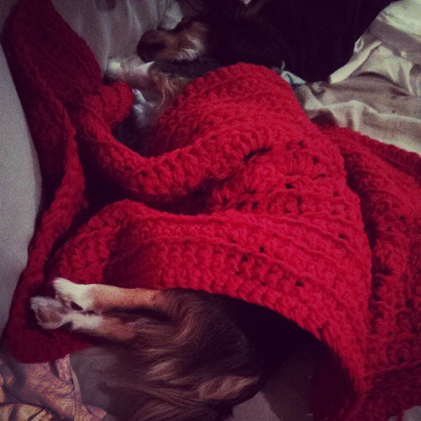 Virtual Dog And Cat Adoption Games