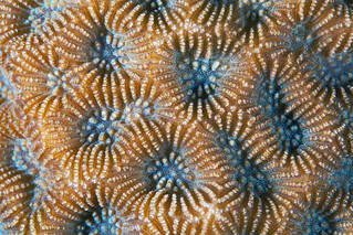 Red Sea Coral 12a | by Alexander Semenov
