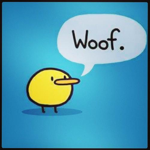 Cute Fat Fluffy Baby Duck Duckling Woof Bark Dog