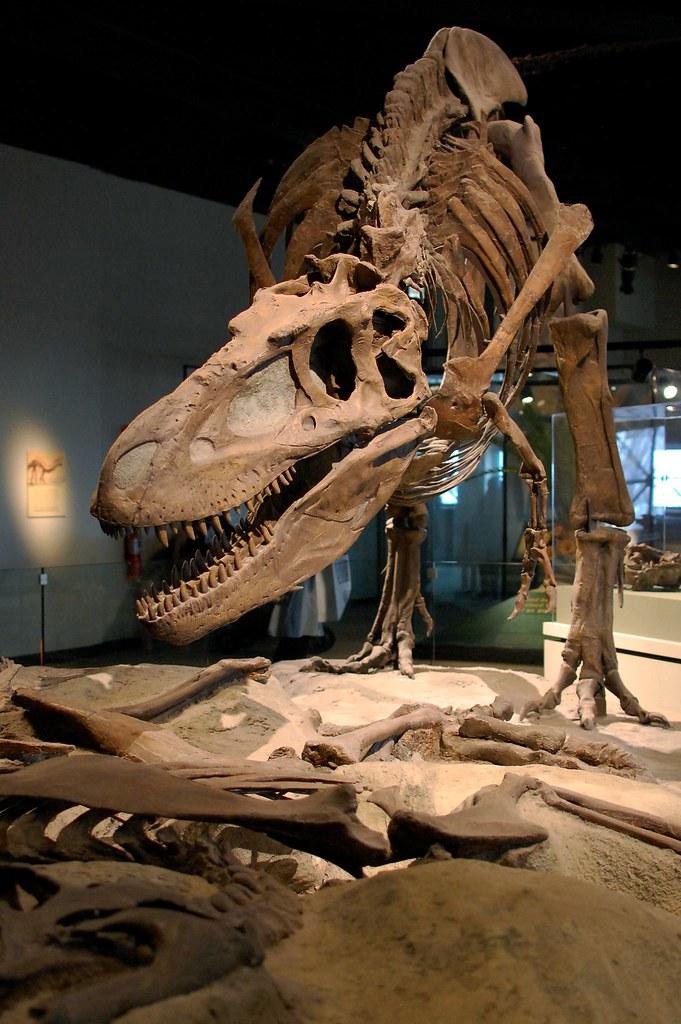 The Field Museum   Daspletosaurus skeleton   clio1789   Flickr
