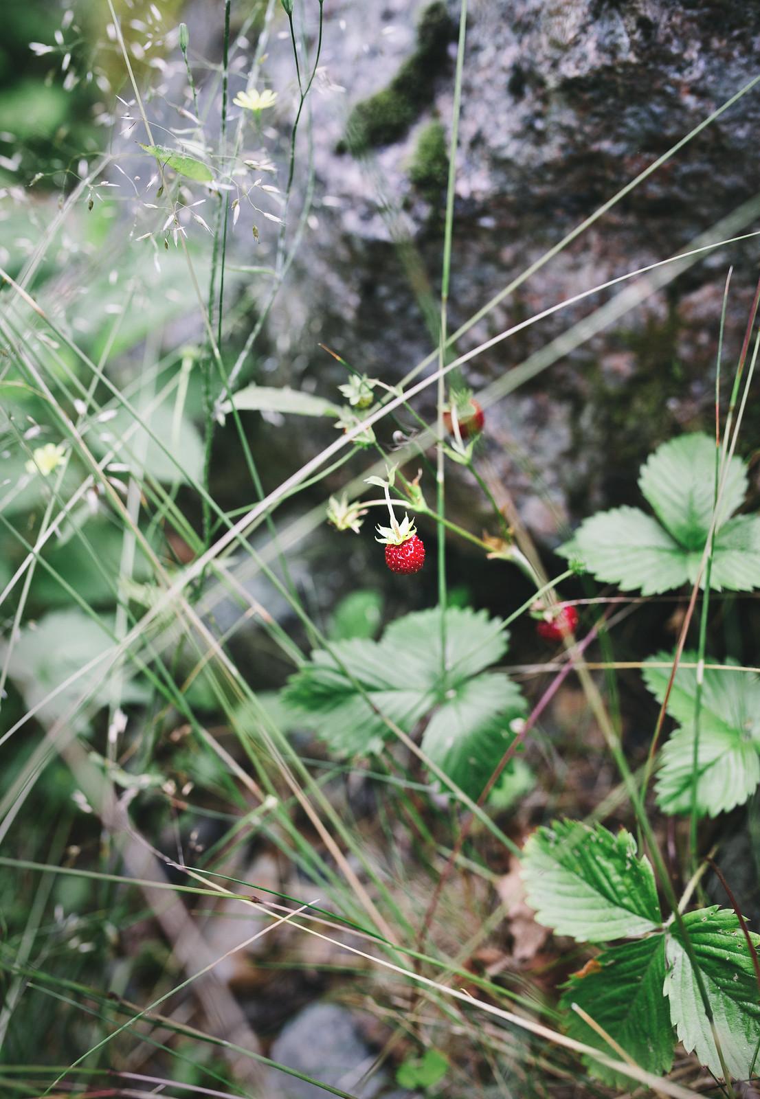 Smultron - Evelinas Ekologiska
