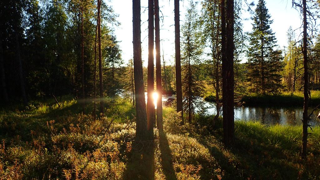 22.7. Ilta-auringossa Paasonjoella.