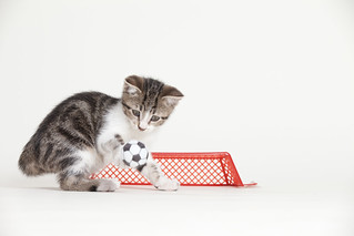 Brown and White Kitten Playing Soccer | by Found Animals