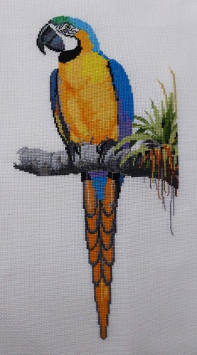Ross Originals - Blue & Yellow Macaw