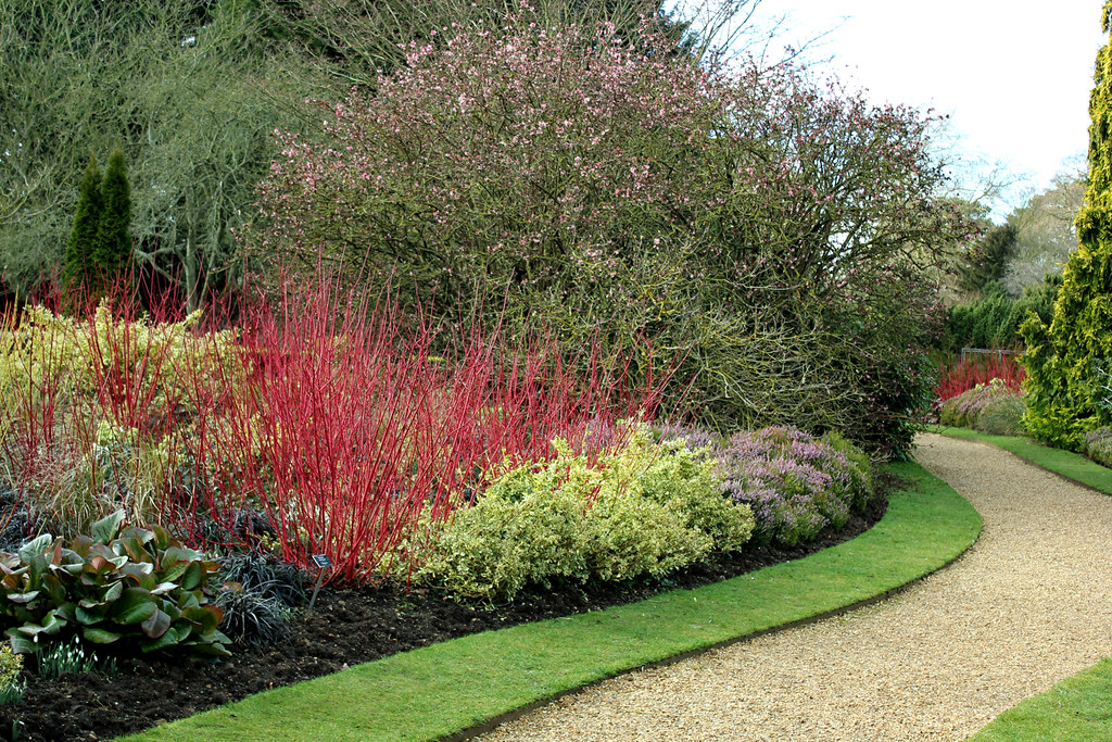 Winter garden border caro shrives flickr - Gardening mistakes maintaining garden winter ...