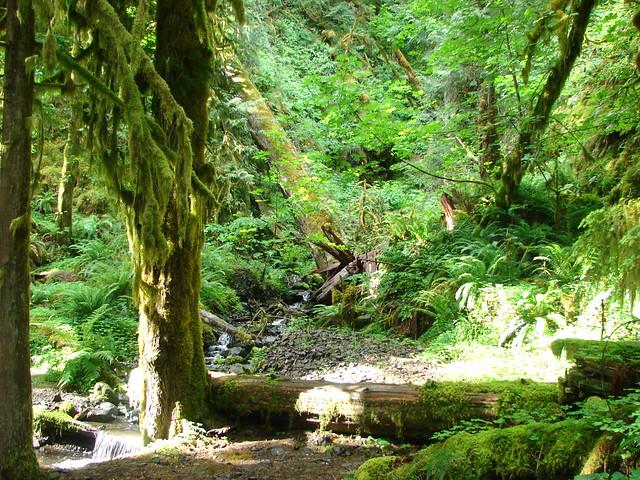 Creek along the Clackamas River Trail
