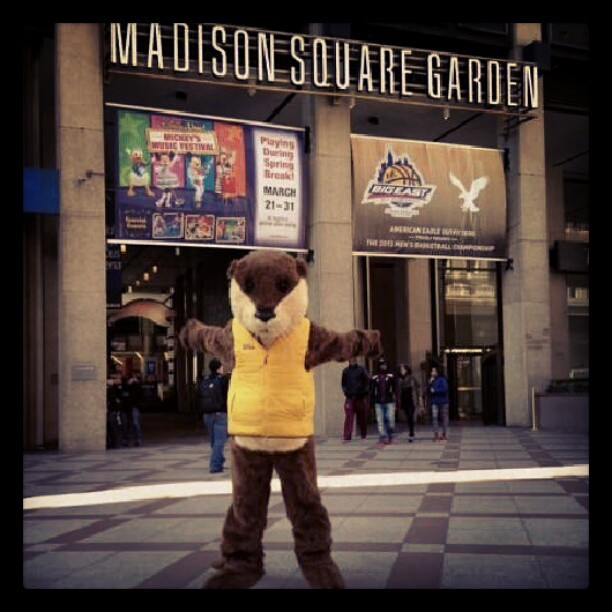 Ollie Visits Madison Square Garden Nyc Otterinthecity Flickr