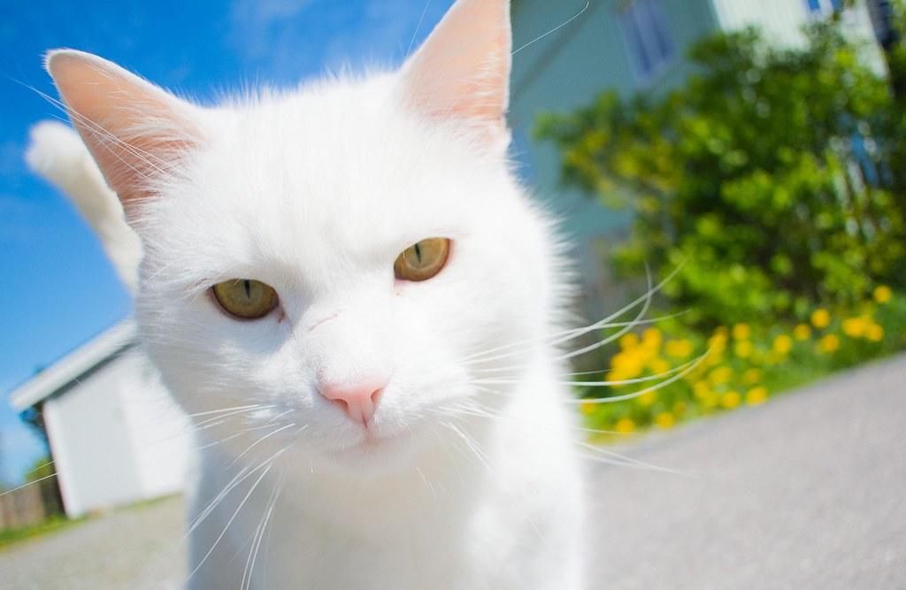 Fluffy Cat Soft Toy