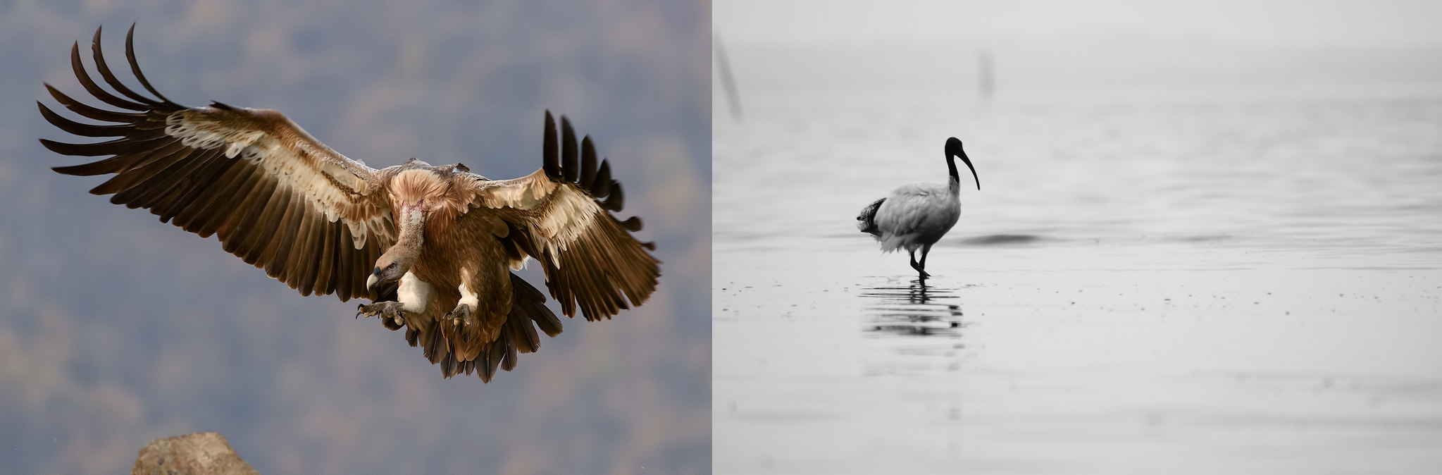 Fotos con digiscoping