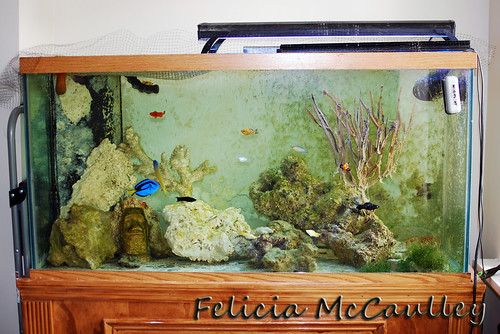 90 gallon Saltwater Reef | by Felicia McCaulley