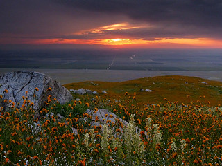 Wildflower Sunset | by Kahlee Spiritdancing