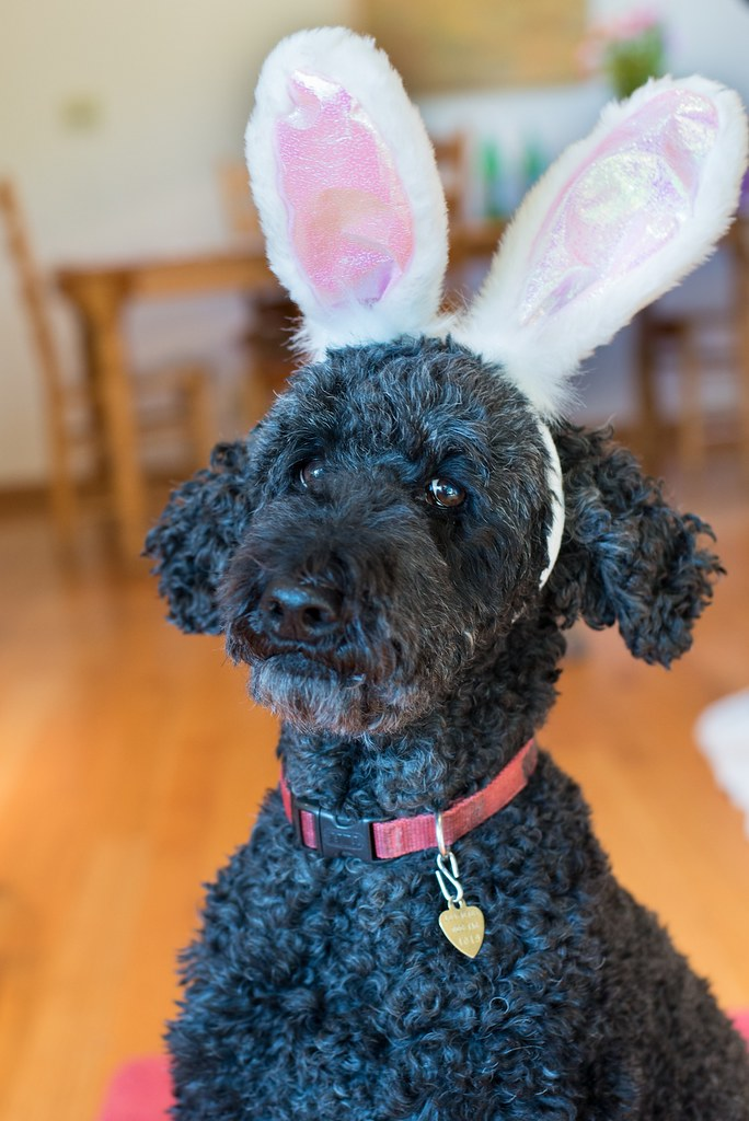 Easter Rabbit Ears Craft Store