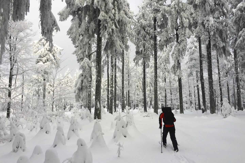 Vláďa, ledoví mužíci a divotvorný les