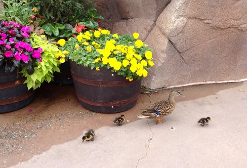 Wildlife challenges at Disney World | by Erin *~*~*