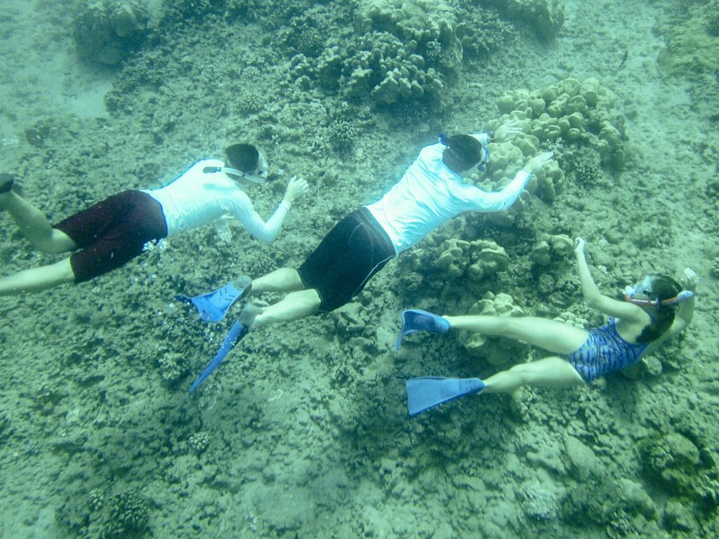 Hanauma Bay Snorkeling Seabird Tours