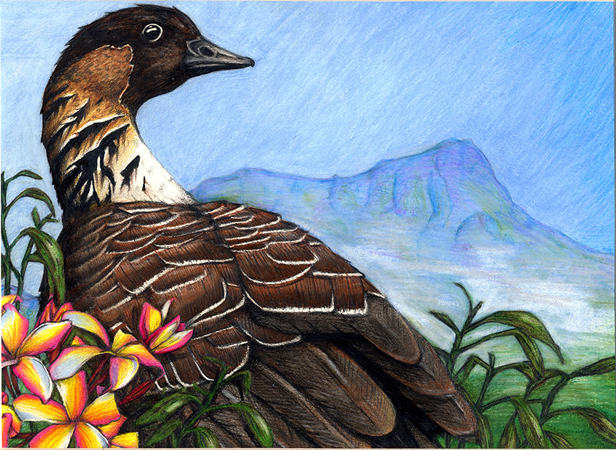 Jrduck2013vt 2013 junior duck stamp best of show vermont for Vermont fish and wildlife jobs