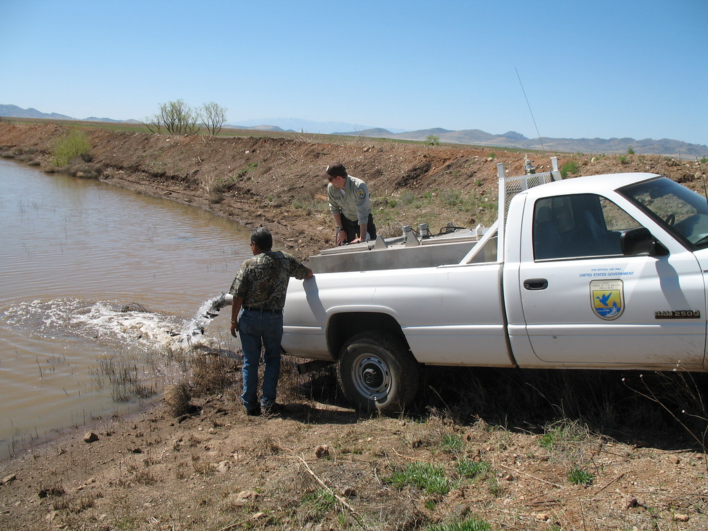 Biologists From The Usfws And San Carlos Apache Tribe Stoc