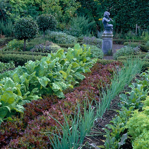 Rows Of Leeks, Lettuce, Beetroot And