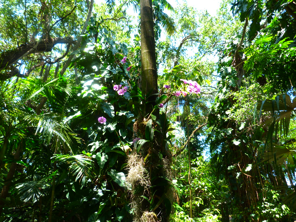Tropical Rainforest Is Untapped Natural Resources In Africa