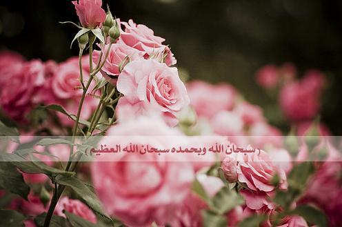 سبحان الله وبحمده سبحان الله العظيم | عن أَبَا ...