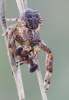 Spider vs. ant | by Cristian Arghius