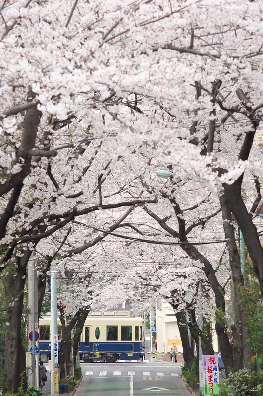 桜トンネルの向こうを都電荒川線が駆け抜ける