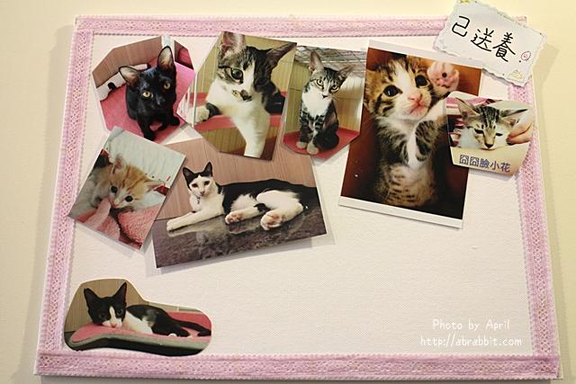 29435245064 fe00d148a5 z - 【熱血採訪】[台中]朵喵喵咖啡館--愛貓人士請進,這裡是貓咪中途之家、台中貓餐廳、貓咖啡廳@東區 自由路(已歇業)