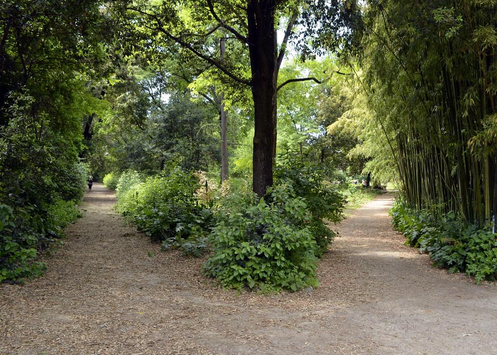 jardin des plantes montpellier france gwendolyn stansbury flickr. Black Bedroom Furniture Sets. Home Design Ideas