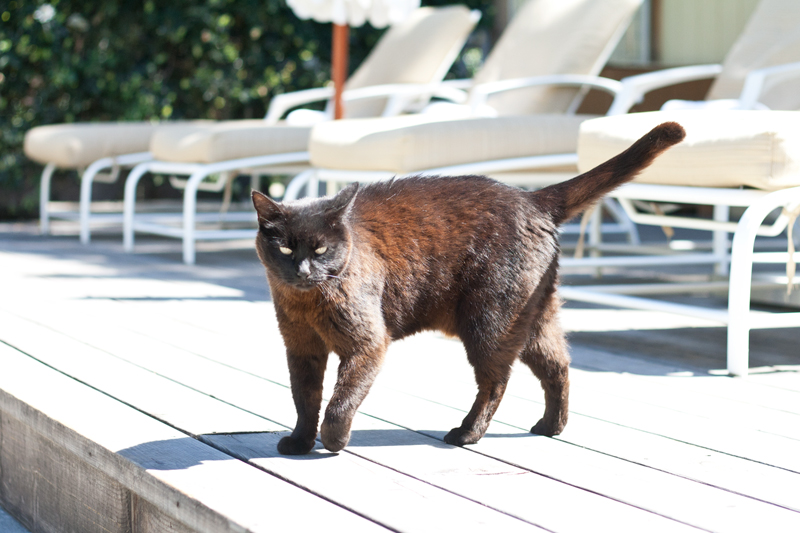 12farmhouse-sonoma-cat-travel