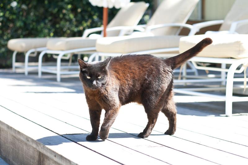 12farmhouse-sonoma-cat-travel