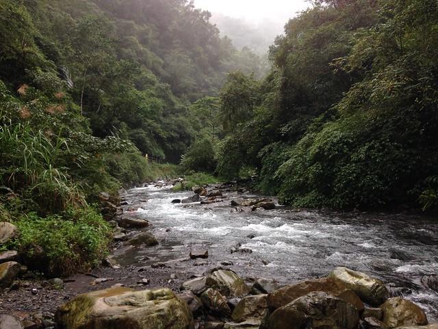 河川兩岸完整的植被,提供台灣山與海之間的網絡。攝影:廖靜蕙
