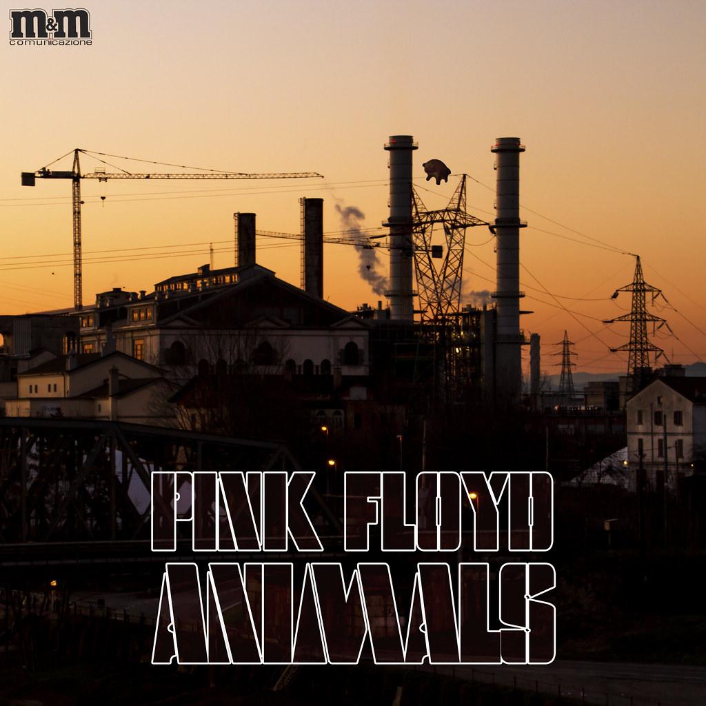 Pink floyd animals -  Pink Floyd Animals Cover Rivisitata By Massimo Mazzoni 78
