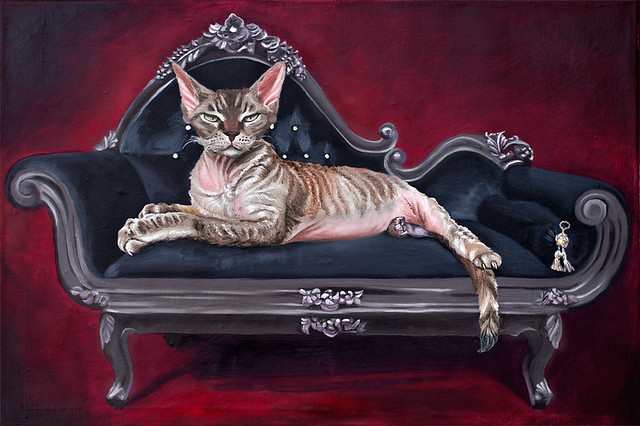 Devon rex kater oscar auf chaise longue devon rex cat for Cat chaise longue