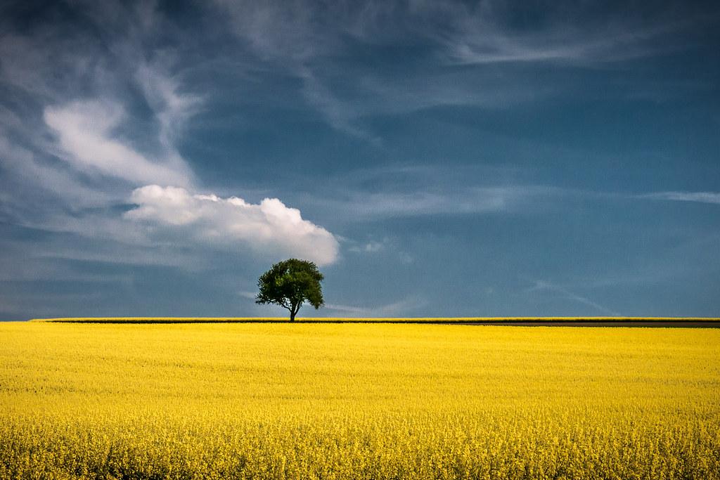 fields of gold andreas wonisch flickr