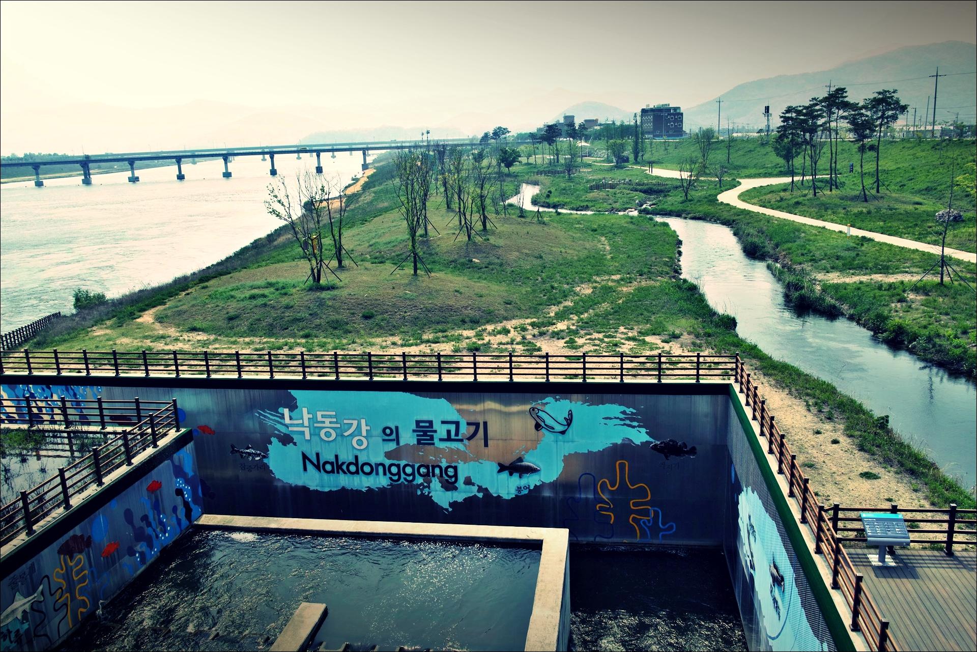 낙동강의 물고기-'낙동강 자전거 종주여행'