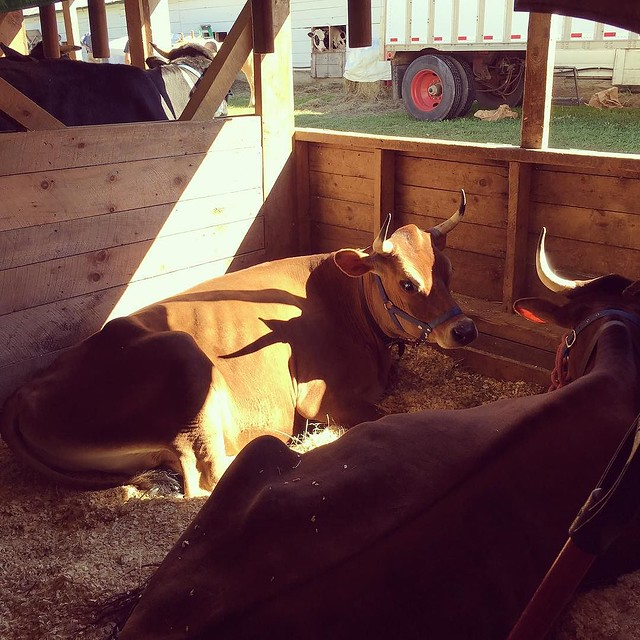 #barnlife #tunbridgefair