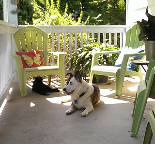 The #prompt for day 15 of the #ctmonthinthelife  #igchallenge  by @createandthrive is #rest... What better place to take a break than on my very own #frontporch , usually with a #pet or two, in this case, with Morrigan and Caena.  Sometimes you can hear a | by WolfSilverOak