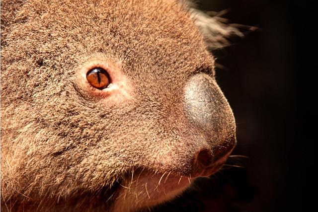 koala mattress how to close