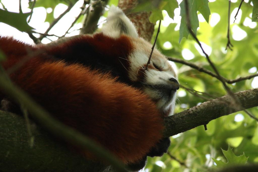 Zoo de la Boissère du Doré 29409080880_a9e0006f32_b