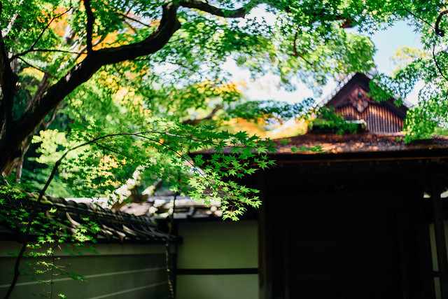 Kyoto_Koto-in_11